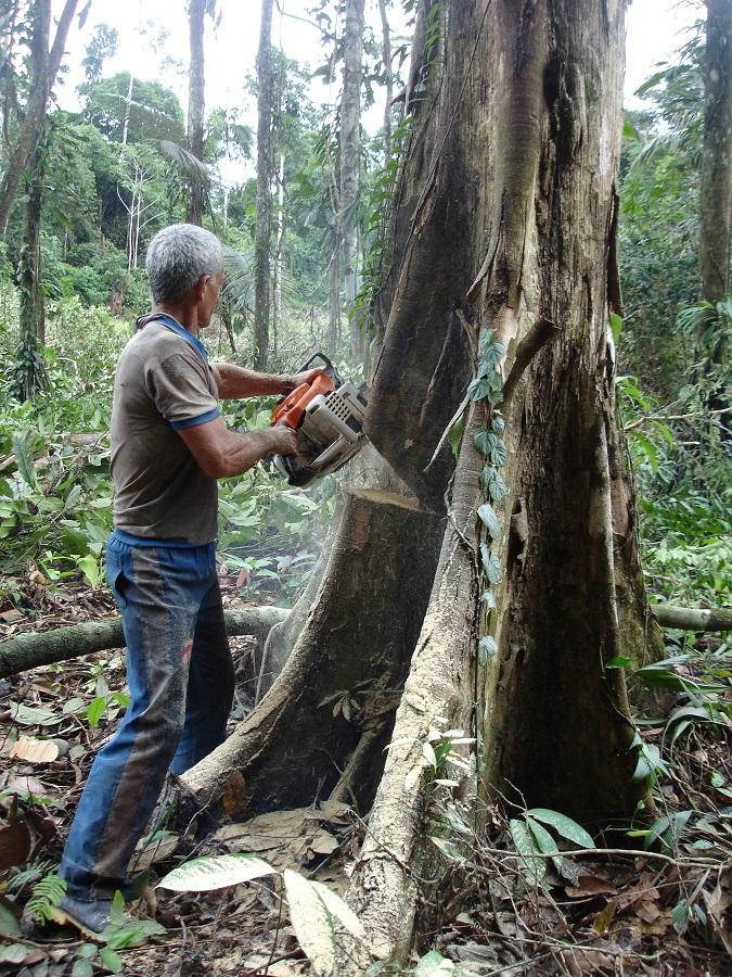 ecocidio-Benjamín Constant-Brasil (Amazonia) foto Carlos de Urabá.JPG