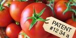 4764_tomatoTakeover_1_460x230.jpg