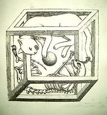 Paradoja_de_el_gato_de_Schrödinger.jpg