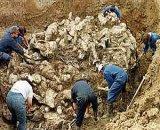 asrebrenica.jpg