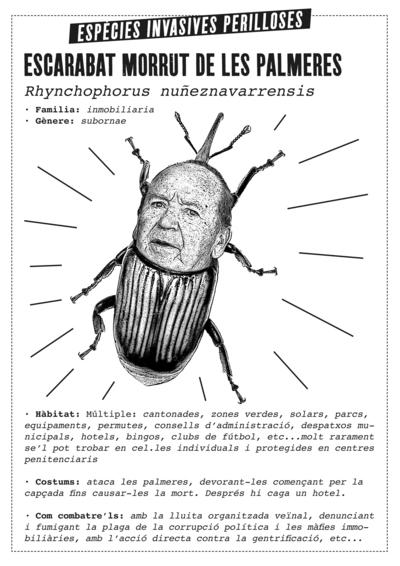 escarabat morrut.jpg