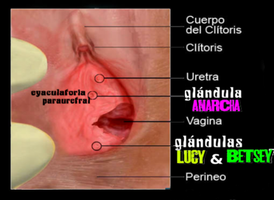 glandulas-anarquia.head.139434763839.png