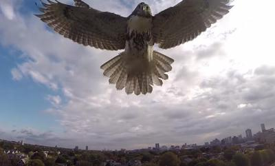 hawk-drone.jpg