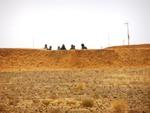 Muro Sahara Occidental.jpg