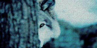 wolf-320x160.jpg