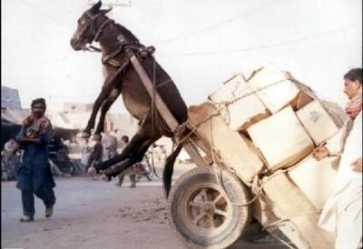 burro-muy-cargado.jpg