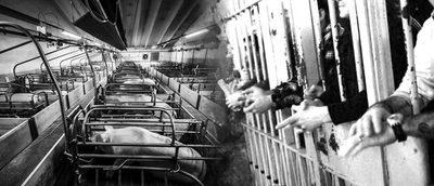 carceles-humanes-y-nohumanes.jpg