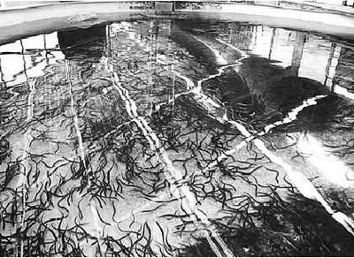 anguiles.jpg