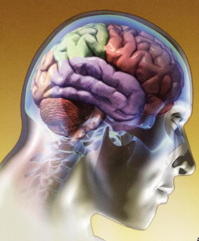 estructura-cerebro-grande.jpg
