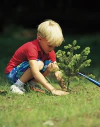 plantando.jpg