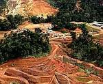 Las trasnacionales contaminan el ecosistema en Panam.JPG