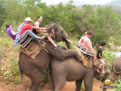 coito-elefantes1.jpg