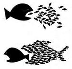 Imatge peixos.JPG