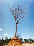 abriendo el camino a la civilización. Manaos-Brasil. foto Carlos de Urabá.jpg