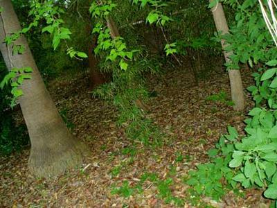 botanicmay05_9.jpg