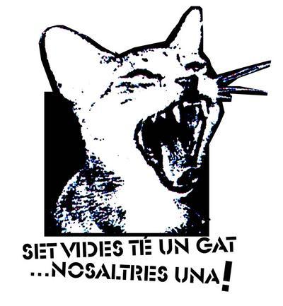 el gato.jpg