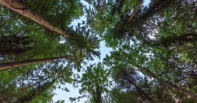 forest2-768x402.jpeg