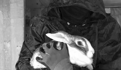 gallinas-y-conejos-liberados-de-un-criadero-en-italia.1.jpg