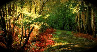 bosque3.jpg