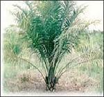 Las plantaciones provocan grandes impactos ambientales.JPG