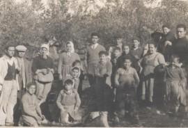 Andalucia aceituna 1950.jpg