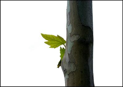 Hojas sostenidas por árbol.jpg