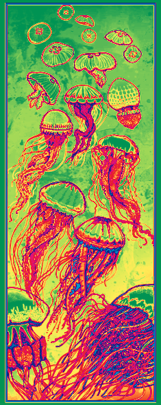 medusas color.png